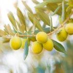 fruit-on-a-tree-150x150