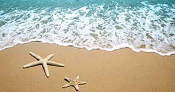 starfish-beach-360x190